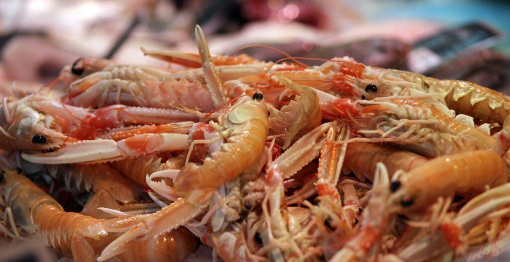 prawn, marine, shrimp